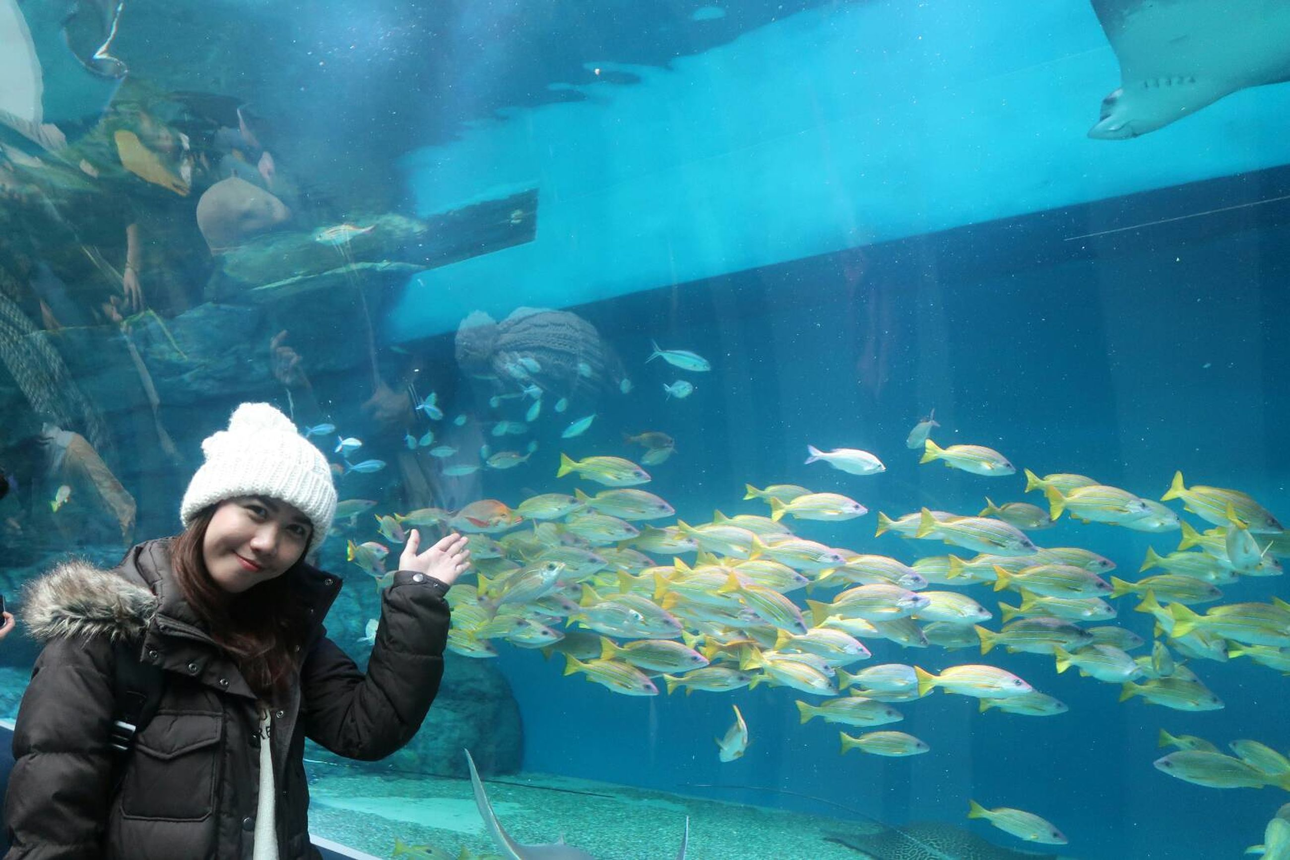 underwater, animal themes, water, fish, vertebrate, animal, sea, animal wildlife, animals in the wild, group of animals, one person, real people, swimming, transparent, nature, animals in captivity, tank, large group of animals, sea life, glass - material, marine, outdoors, warm clothing, undersea