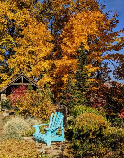 The Healing Garden in Sandpoint Idaho. I am in awe of this scene. I have been thru here several times in the past in many seasons. The blue chair is new and is my favorite addition this far. It really is welcomed contrast against the fall scenery. Not to mention a great place to just relax. Enjoy. Healing Garden Fall Beauty Fall Colors Outdoors Nature Beauty In Nature No People Day Heaven Peaceful Idahobeauty Sandpoint Flowers,Plants & Garden Nature Yellow Beauty In Nature Plants 🌱 Enjoying Life Serenity Peaceful Moment Sunlight Peace And Tranquility Forest Peaceful View