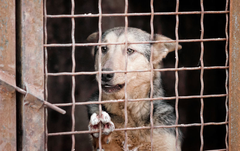 Close-up of a dog in cage