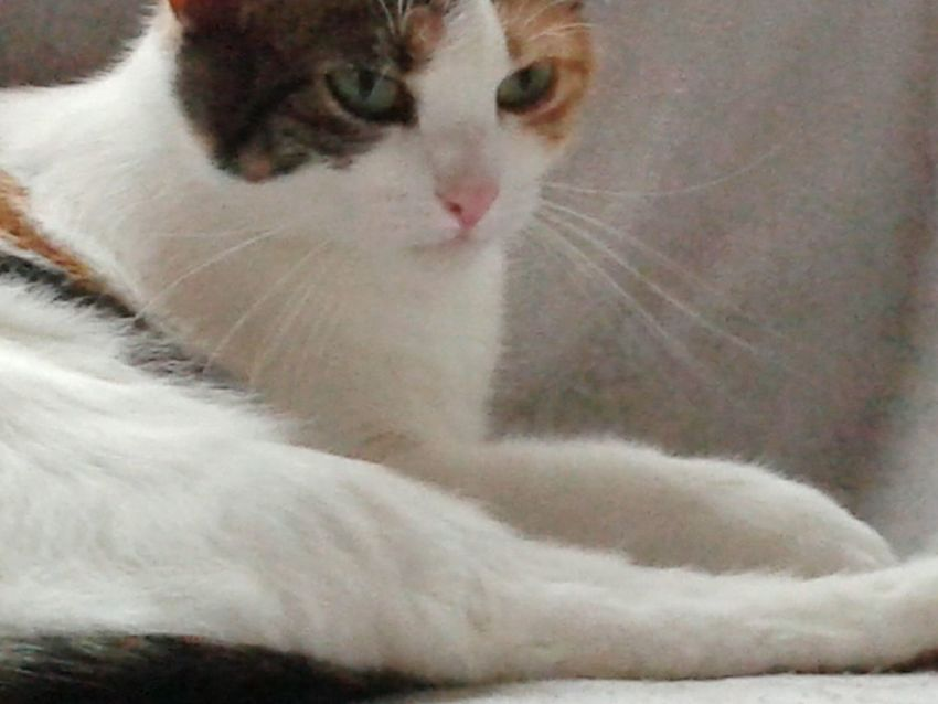 Meine katze Lilli My Cat! Pet Portraits