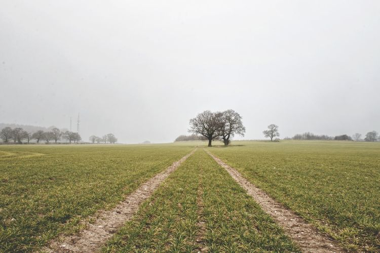 Agriculture Rural Scene Field Farm Crop  Tree Nature Landscape Day Beauty In Nature Outdoors No People Freshness Tranquility Winter Tranquil Scene Growth Plowed Field Scenics Food