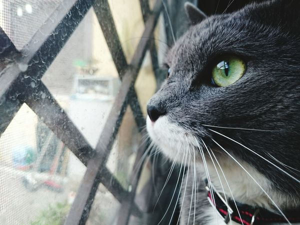 One Animal Animal Themes Domestic Animals Window Cat Animal Head  Domestic Cat Pets Zoology Curiosity Whisker Glass - Material Day Focus On Foreground Animal Blue Sky Cateyes Eyes EyeEm Best Shots Animal Head  Animal Head  First Eyeem Photo One Animal Animal Themes Pets