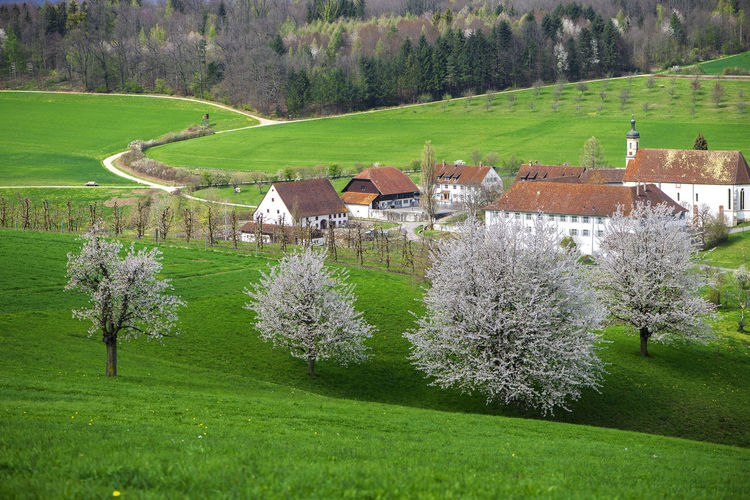 Scenic view of field against trees and houses