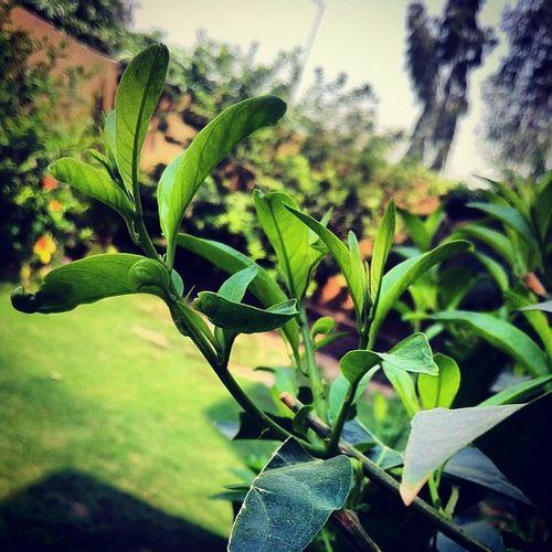 Le suraj mamau in full mood Bongistan Gardanphotography Green Gogreen leaves suday tranceforever wapda R.I.P LE zaleel log ole ole ole ole yolo baws morning lassi inshort high!