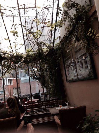 Plants Window Bar Cosy Stout De Gouden Vis Mechelenbelgium Place To Be