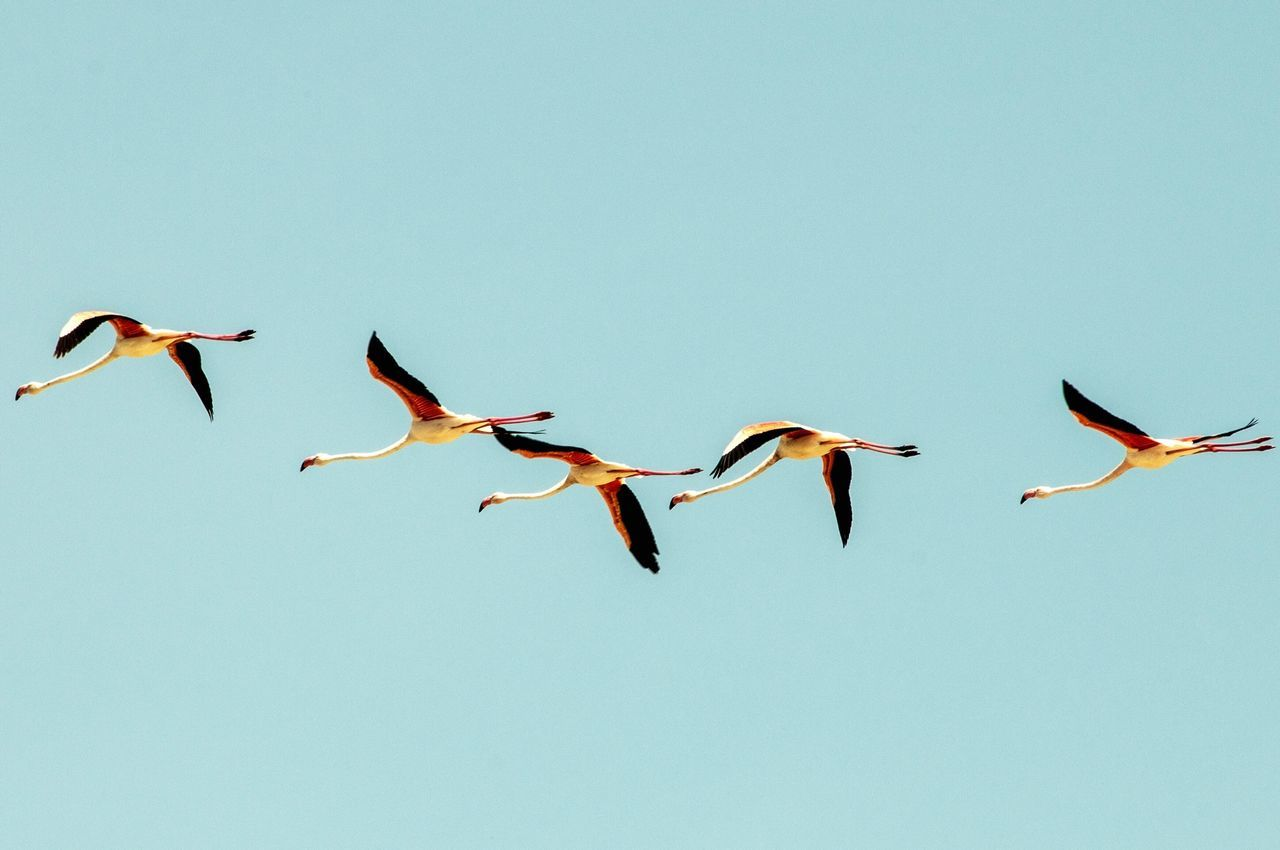 View of birds flying in sky