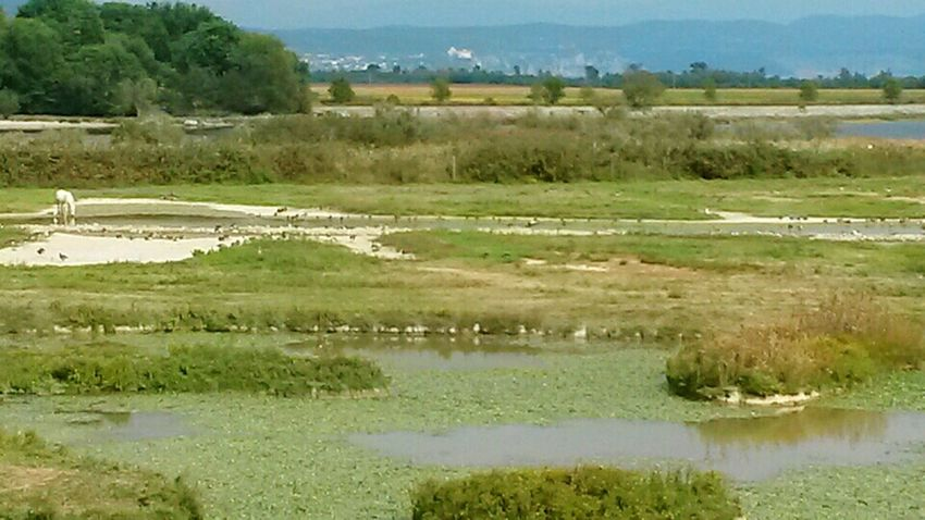Wildlife & Nature Natural Reserve River Mouth Wild Horses Waterland Bird Watching Camargue Horses