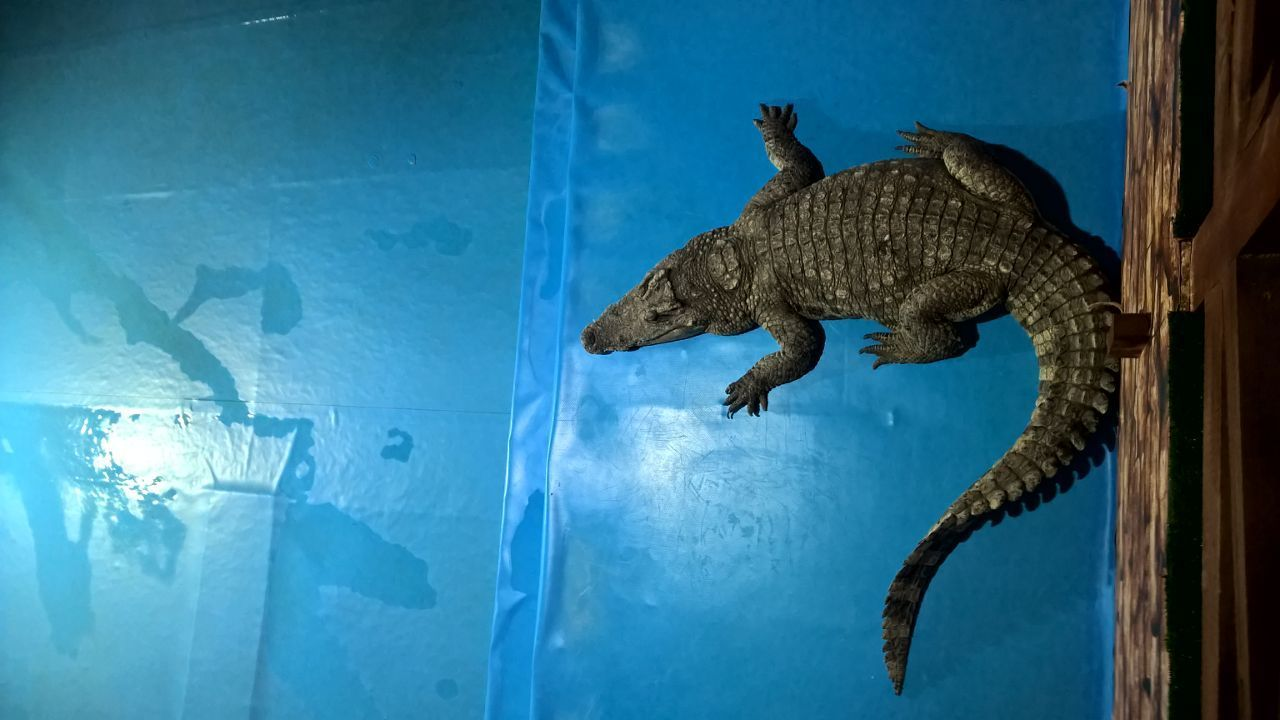 animal themes, reptile, one animal, indoors, aquarium, day, no people, close-up