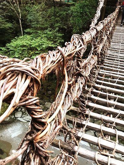 徳島県 日本 Tokushima_Japan Japan Travel Tree Nature Wood - Material No People Forest Day Outdoors かずら橋 吊り橋 Suspension Bridge Bridge EyeEmNewHere