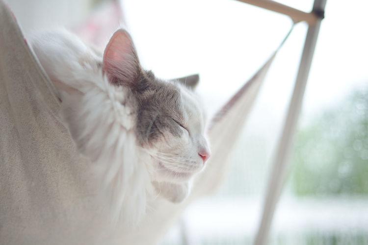 Cat sleeping on hammock by window