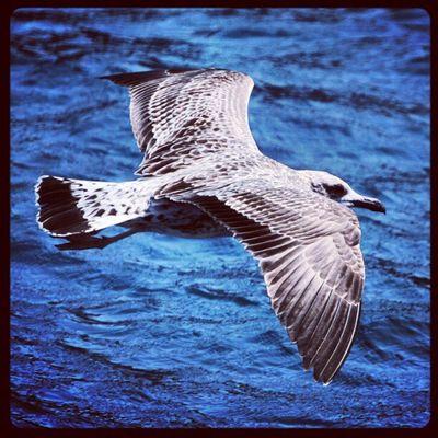 #bird #fly #water #igers #igfamos #instgramm #instagood Water Bird Fly Igers Instagood Igfamos Instgramm