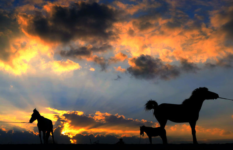 Silhouette horses against dramatic sky during sunset