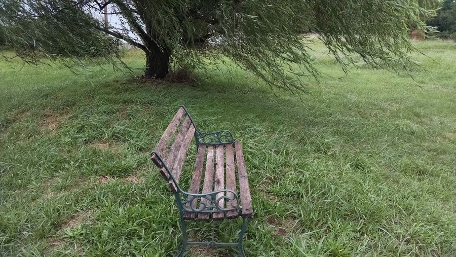 Alone Time Bench Nature And I Need Company Old Bench Quiet Moments Quiet Place  Willow Tree