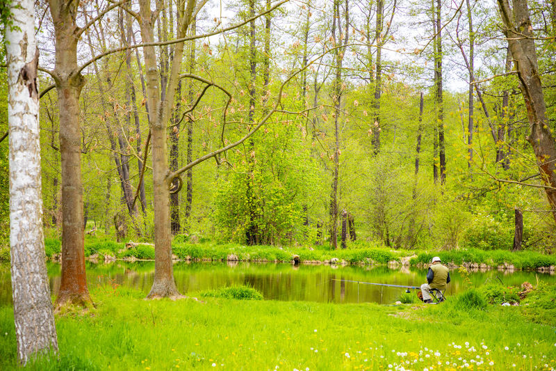 Medieval Blatna Castle in Czech Republic during spring season in Czech republic Tree Plant Forest Land Lake Nature Real People Growth Beauty In Nature Water Men Green Color Day Leisure Activity Tranquility One Person Tranquil Scene Non-urban Scene WoodLand Outdoors