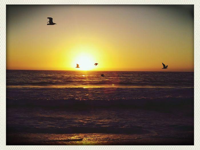 reñaca ultimo dia:3 puesta de sol aves en el atardecer lugar perfecto*-* Relaxing Playa Reñaca
