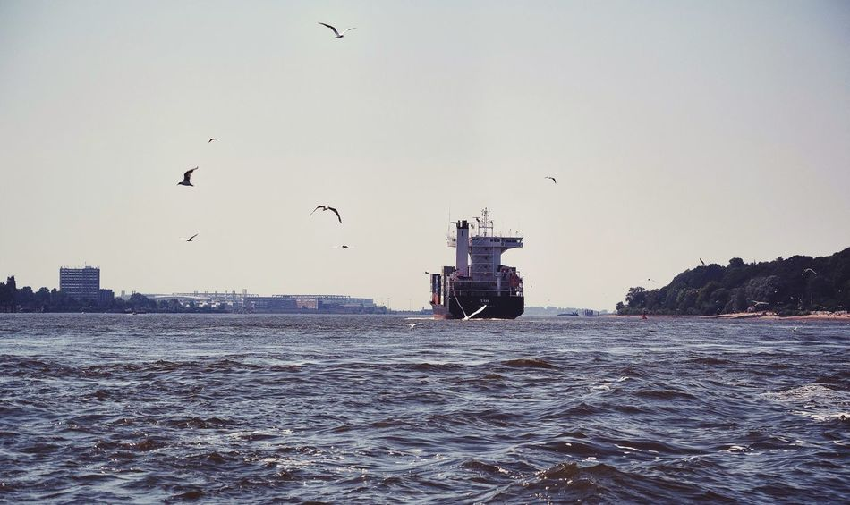 Birdwatching Elbe Scenery Shots Melancholic Landscapes ShipSpotting From My Point Of View Beauty In Ordinary Things