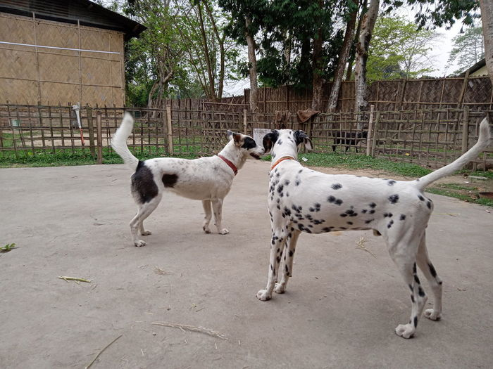 View of two dogs on street