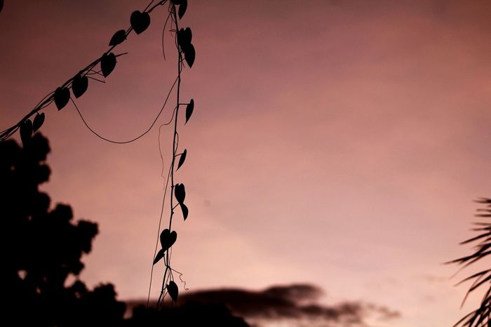 EyeEm Selects Sunset Silhouette Outdoors Nature No People Red Beauty In Nature Sky Day Close-up