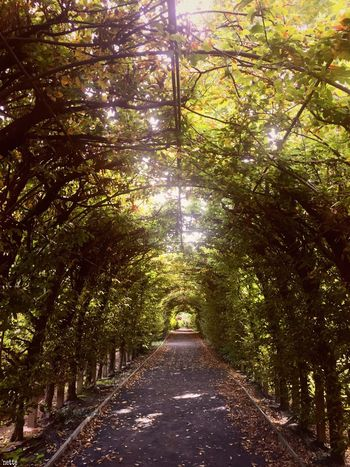Nature Path Tunnel Of Trees Beauty In Nature Snug Harbor