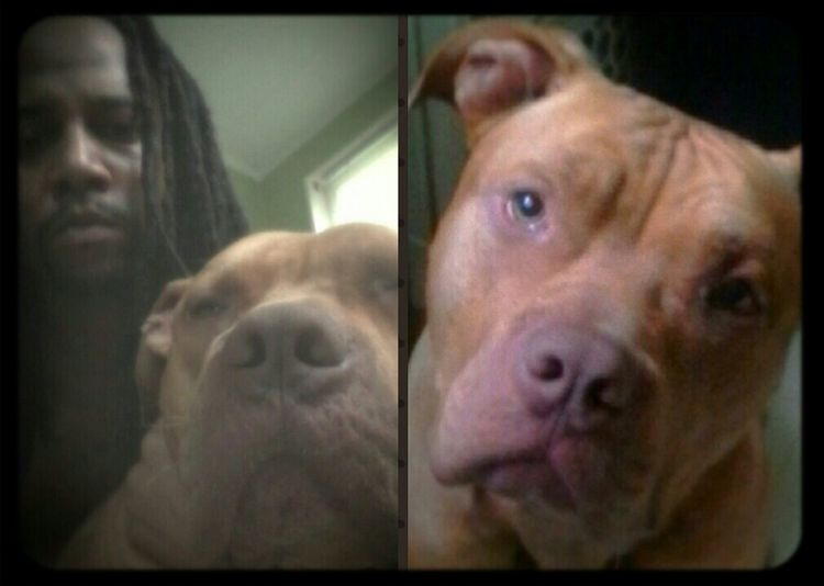 Pit Bull Lover & Supporter Clifford The Big Red Dog Red Nose Pit Simba ❤ *simba is the pet name I gave my bf :-p