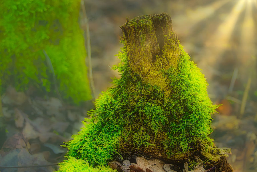 Baumstumpf Baumstumpf - Moos - Baumpilze - Zunder Colour Your Horizn EyeEm EyeEm Best Edits EyeEm Best Shots EyeEm Best Shots - Nature EyeEm Nature Lover EyeEm Selects EyeEm Gallery EyeEmBestPics Beauty In Nature Close-up Day Eye4photography  Eyeemphotography Eyemphotography Focus On Foreground Green Color Growth Nature No People Outdoors Plant Tree