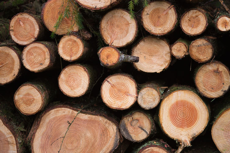 Log Timber Lumber Industry Wood Forest Firewood Full Frame Large Group Of Objects Tree Backgrounds Deforestation Stack Wood - Material Fuel And Power Generation Abundance No People Environmental Issues Fossil Fuel Shape Nature Woodpile Outdoors Tree Ring Chopped England