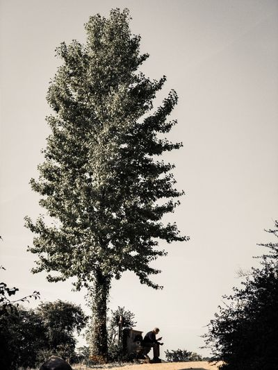Rest. Tree Plant Sky Nature Growth Low Angle View No People Silhouette Clear Sky Beauty In Nature Treetop Non-urban Scene