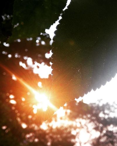 Close-up of tree against sun