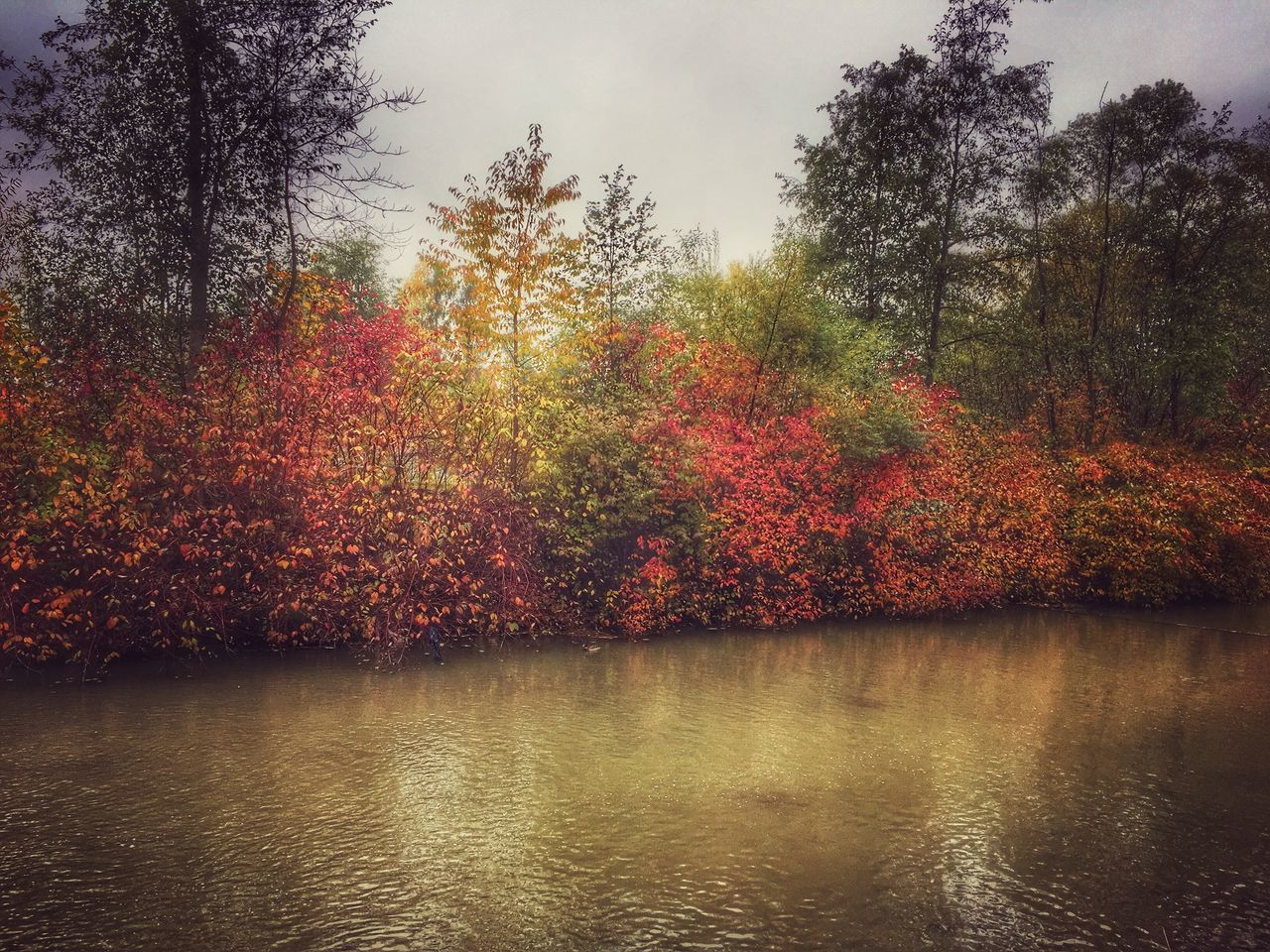 autumn, change, tree, nature, beauty in nature, leaf, tranquility, scenics, no people, water, tranquil scene, lake, outdoors, forest, growth, landscape, day, sky, maple