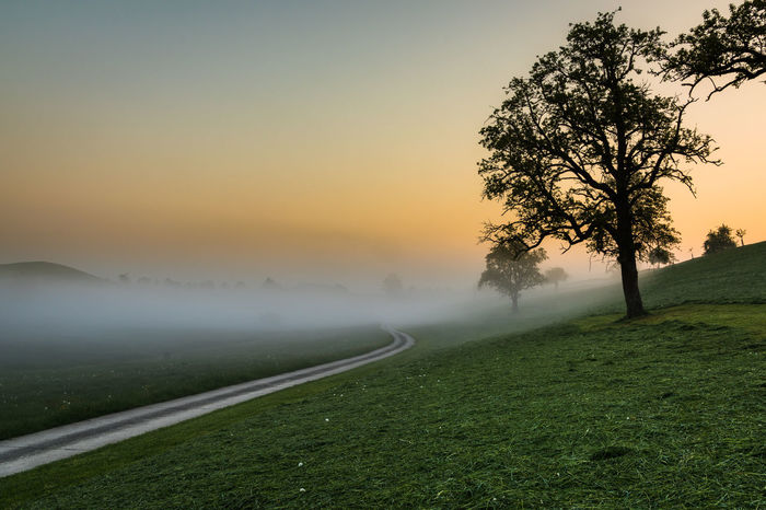 Early morning on a beautiful spring day Misty Morning Nature Road Sunlight Tranquility Tree Early Morning Landscape Mist Misty Morning No People Pathway Rural Scene Sky Spring Springtime Sunrise Way