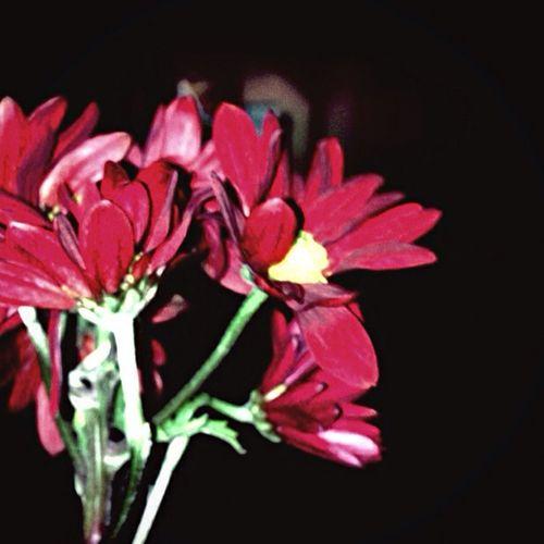 اهلن?. معرض.الزهور