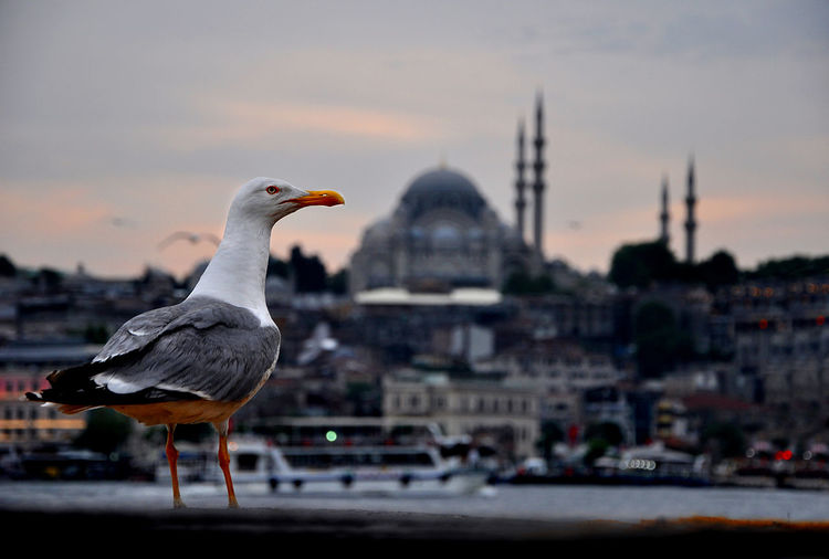 Bird Animal Themes Architecture Vertebrate Animal Wildlife City Animal Animals In The Wild Built Structure Building Exterior Sky Focus On Foreground Sunset Nature Transportation No People Group Of Animals Seagull Building Two Animals Cityscape Mosque Bird Photography
