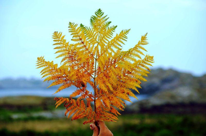 Close-up of autumn plant during autumn