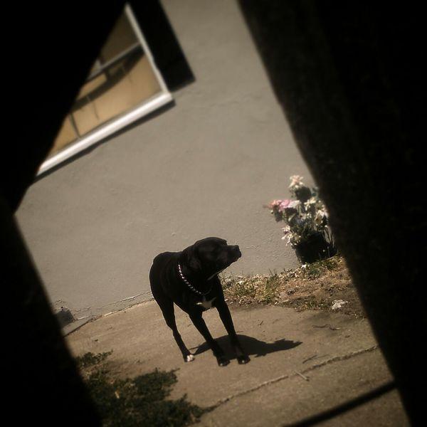 Otis Neighborhood Dog Framing