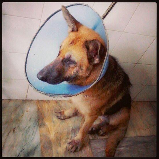 after miki's medicated bathe. yey. baitbait bebe. Loyaldog Animalandia Petlover Miki voninari