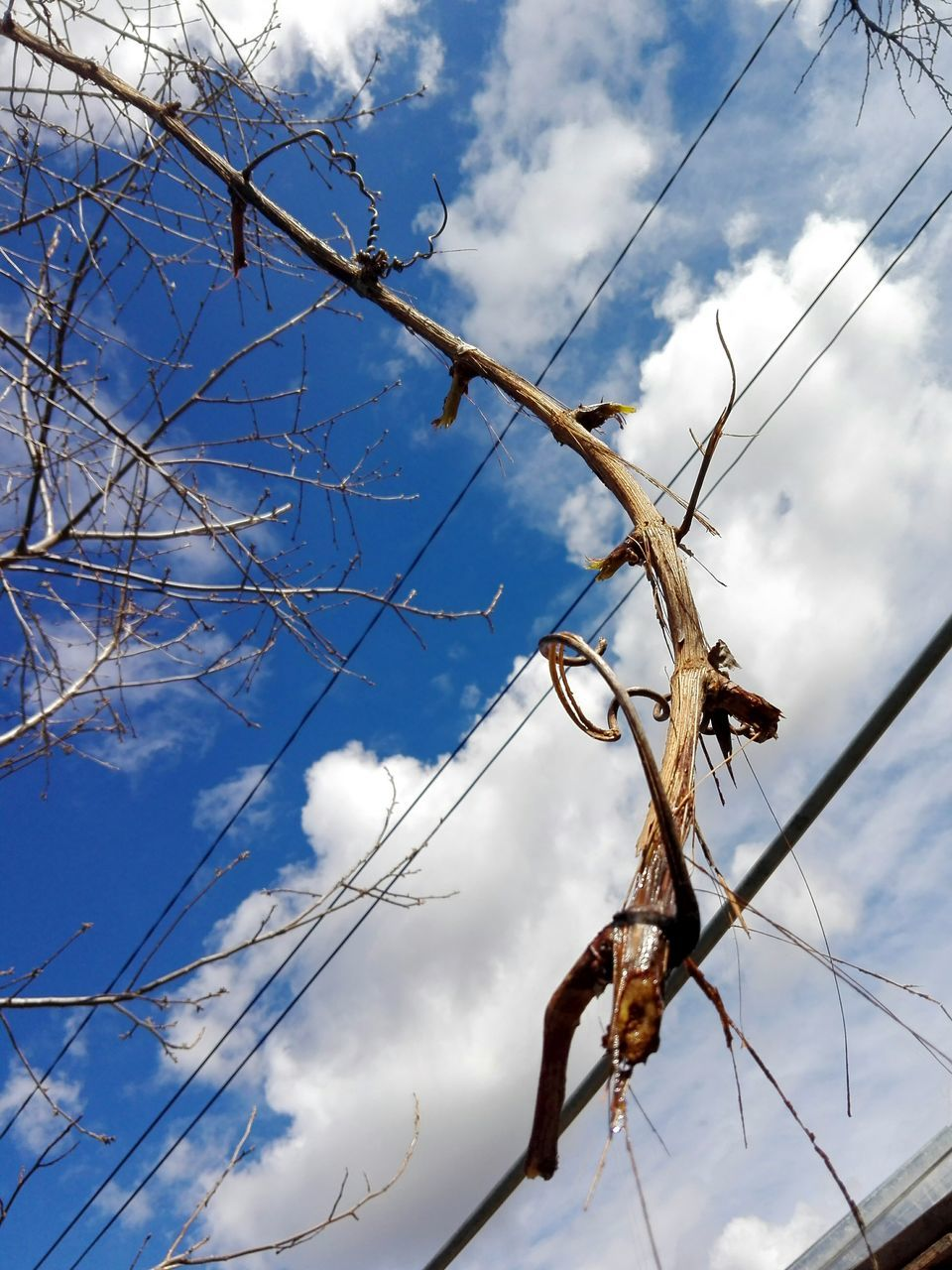 cloud - sky, sky, low angle view, day, outdoors, nature, no people, branch, growth, beauty in nature, tree, close-up