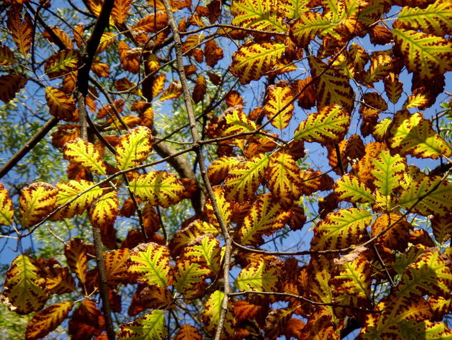 Autumn Auumn Colors Beauty In Nature Coorful Leaves Leaves_collection Low Angle View Outdoors Tree Yellow And Brown