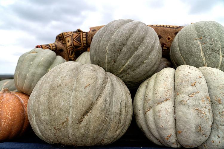 Pumpkins Turkey