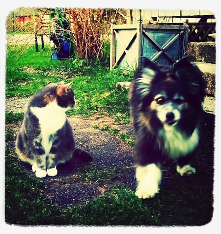 BFF... nja, men vi kan umgås...! My Dogs Are Cooler Than Your Kids Min Hund Dog I Love My Dog