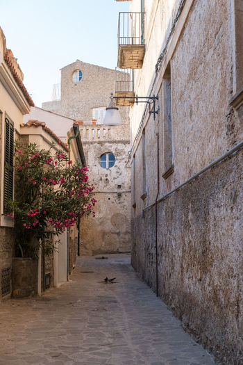 old town of Castellabate, Italy Architecture Building Exterior Castellabate Castellabate Salerno Castellabate Campania Cilento Sud Benvenutialsud Super City Flower No People Old Buildings Outdoors Town