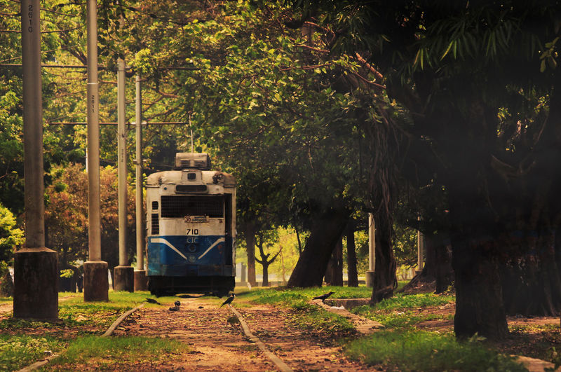 Old Tram On Field Amidst Trees