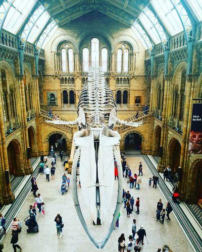 London Whale Nationalhistorymuseum Museum City Arch Ceiling Architecture Built Structure