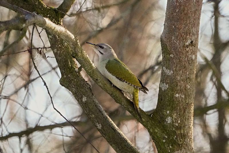 Beautiful Nature ClouseUp Tree Wintertime Cold Temperature Forest Trees Naturelovers One Bird On Focus Woodpecker Bird