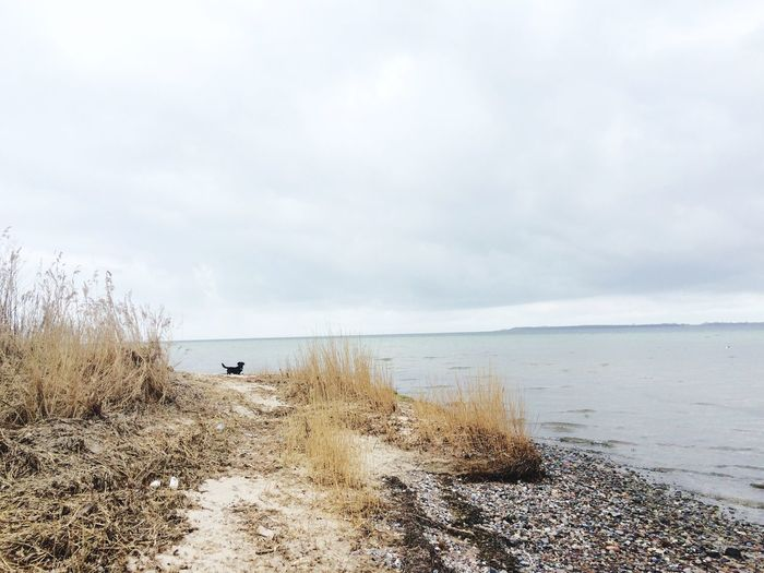 Ostsee Spring Nature Family & Friends & Dogs