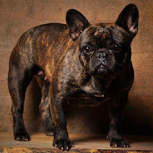 Dog Photagrapher