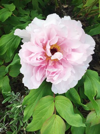 Flower Petal Growth Nature Beauty In Nature Plant Flower Head Leaf No People Green Color Wild Rose Outdoors Animal Themes EyeEmNewHere