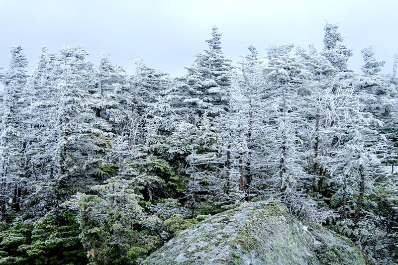 Mt. Webster White Mountains Park Weather Tree Nature Snow Cold Temperature No People Winter