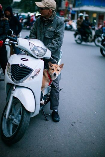 Walk in Ha Noi. Vietnam Streetphotography Check This Out Dog Asian