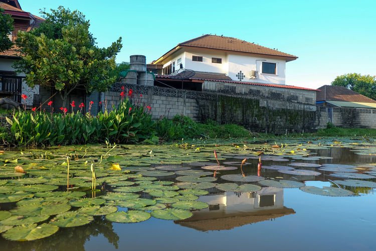 Water lilies in swimming pool by lake against building