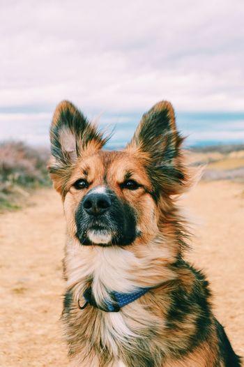 Portrait of dog on beach